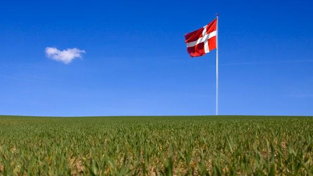 Dänische Fahne hinter Acker.