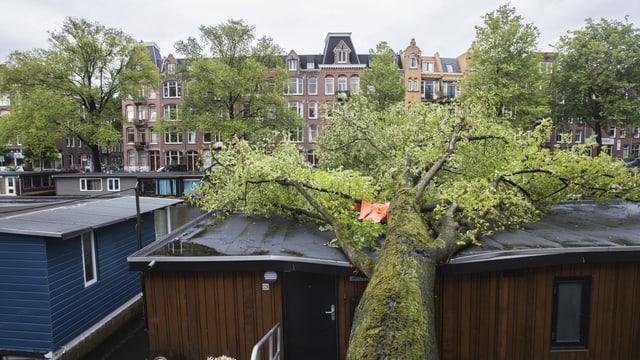 Umgestürzter Baum liegt auf zerstörtem Hausboot.