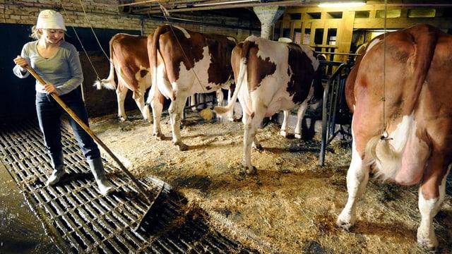 Eine Nachwuchsbäuerin verrichtet Stallarbeiten bei Kühen und Rindern, aufgenommen am 15. April 2009 im Emmental im Kanton Bern.
