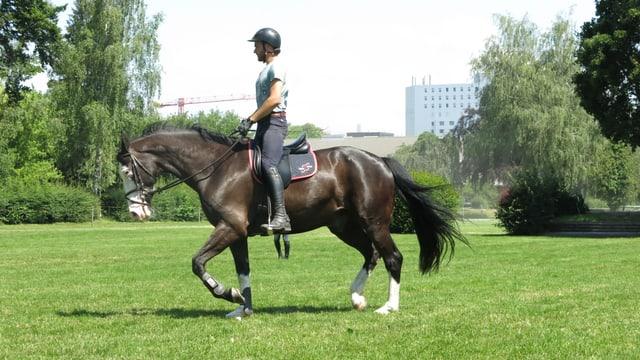 Mann reitet auf Pferd auf grüner Wiese, im Hintergrund Stadtgebäude.