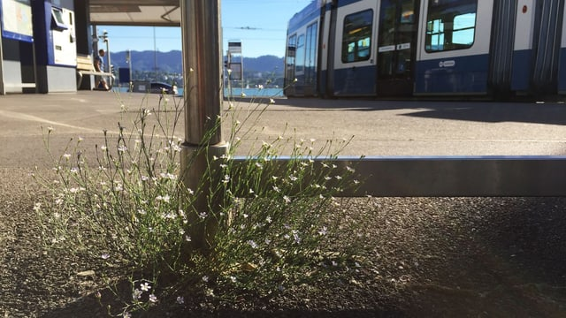 Blumen an einer Tramhaltestelle