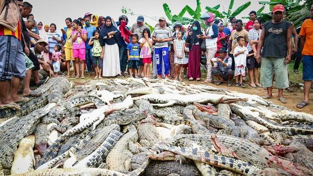 Ein Haufen Krokodilkadaver, dahinter Menschen.