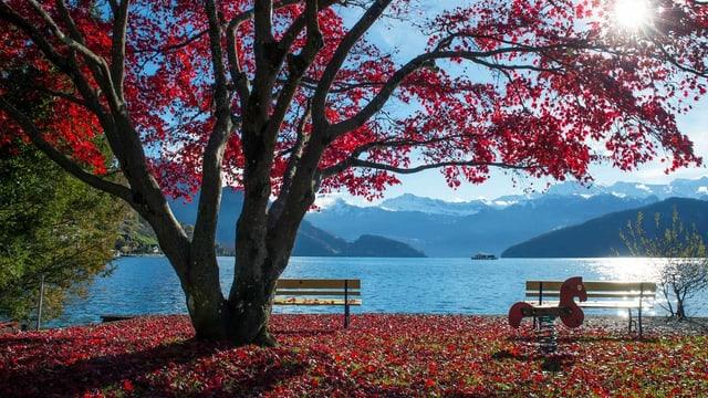 Ein See mit einem Baum. Auf dem Baum und am Boden liegt leuchtend rotes Laub.