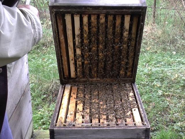 Die Bienen sitzen locker verteilt.