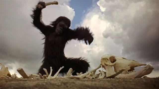 Filmszene aus «2001 – A Space Odyssey» mit einem Menschenaffen, der just die erste Waffe entdeckt.