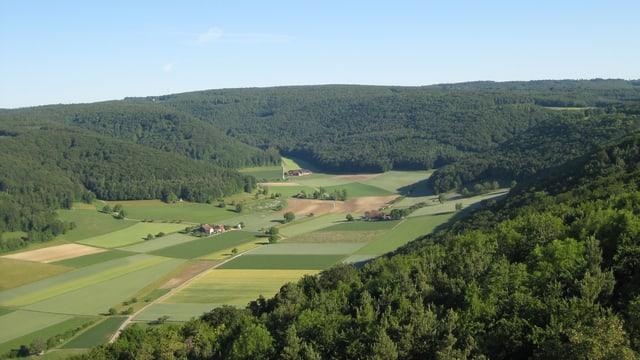 grüne Felder, Wald