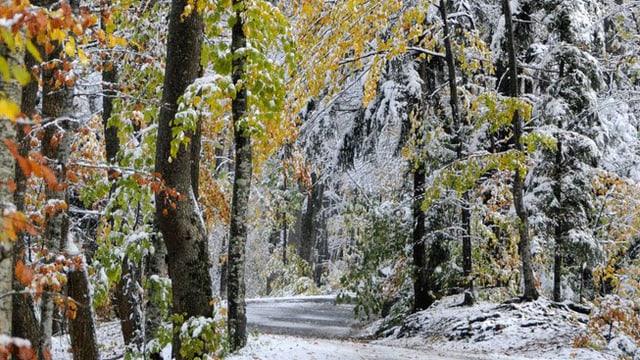 Verschneite Strasse im Wald