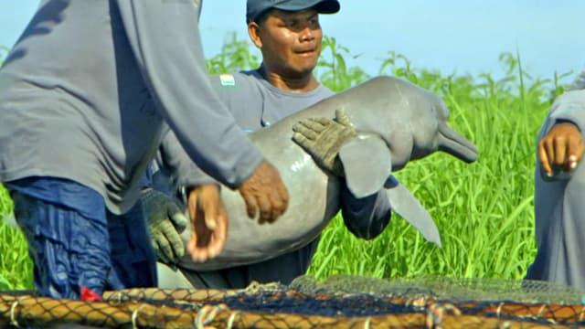 Forscher hält Flussdelfin im Arm
