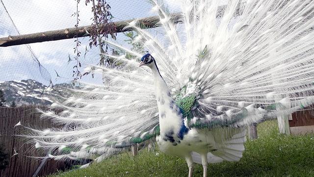 Video «Tiergeschichten (9/10): Sommergeschichten» abspielen
