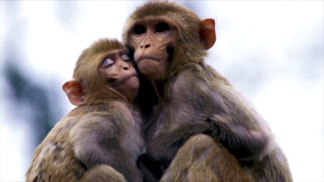 Video «Alternativen zu Tierversuchen» abspielen