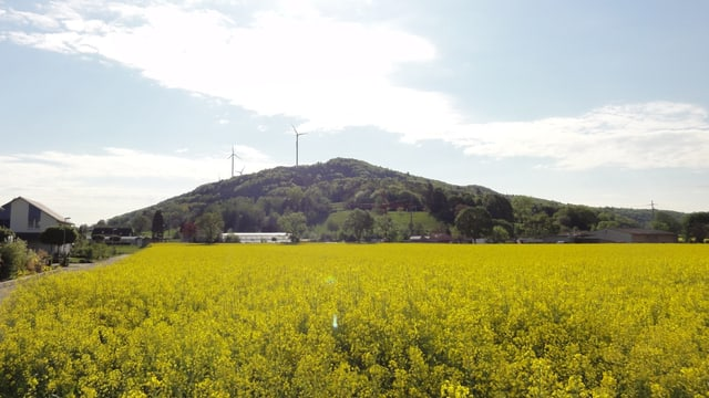 Windräder hinter einem Rapsfeld