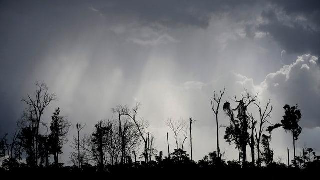 Die Überbleibsel eine Waldstücks des Amazonas in bedrohlichem Licht.