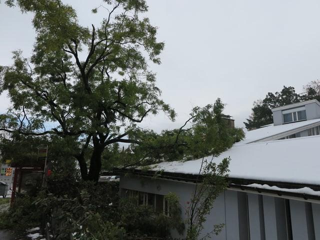 Ein grosser Ast liegt auf dem Dach eines Schulhauses.