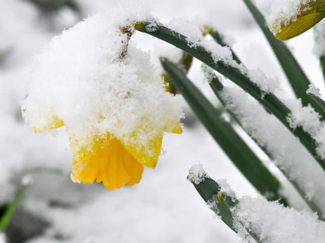Blumen im Schnee.