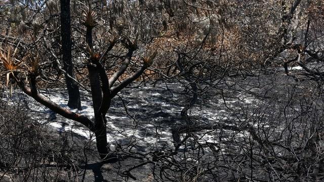 Brandzerstörungen auf Fraser Island