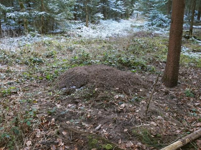 Ein Haufen im Wald.