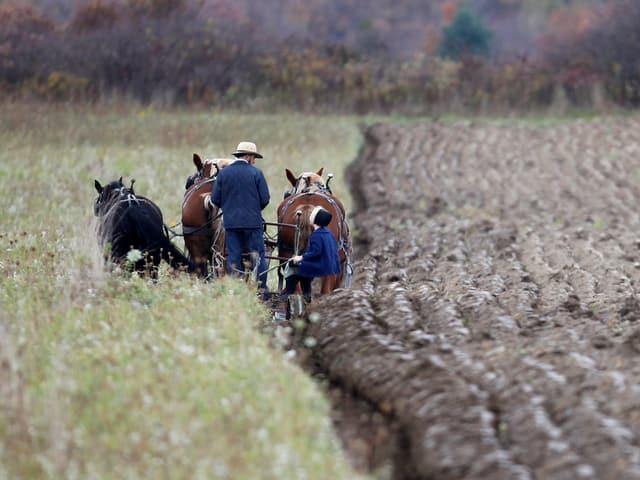 Amische mit Pferdepflug auf einem Acker in den USA.