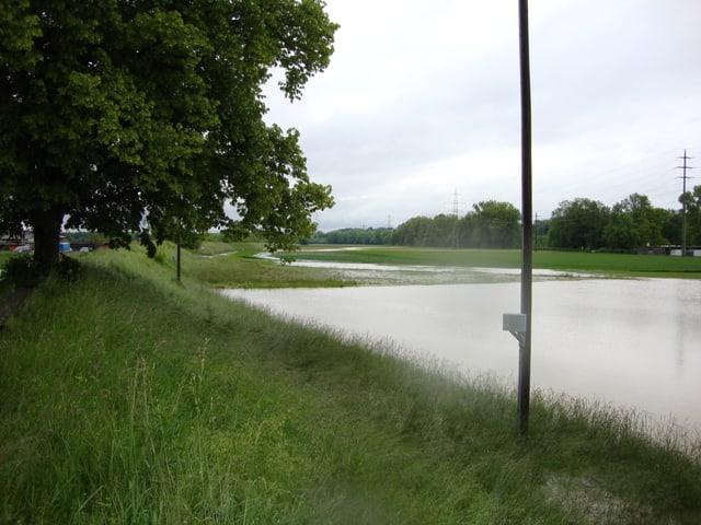 Überschwemmte Wiese