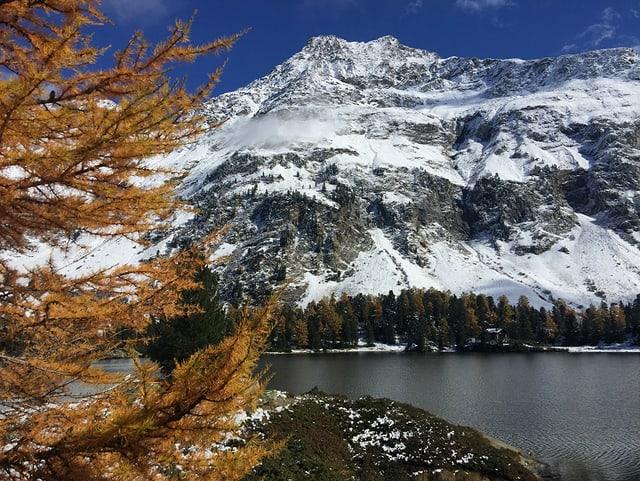 Goldig gefärbte Lärchen und ein frisches Schäumchen Schnee