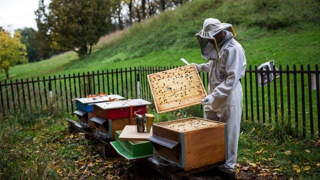 In apicultur avra ina chascha cun avieuls.