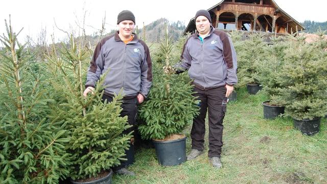 Adrian (l) und Michael Christen mit ihren eingetopften Miet-Christbäumen in Ferenberg.