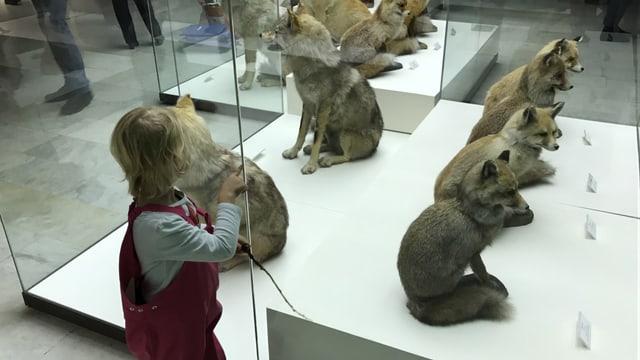 Auf drei Etagen bietet das 1907 eröffnete Darwin-Museum den Besuchern auf unterhaltsame Weise Wissenswertes zur Entstehung und Entwicklung des Lebens.