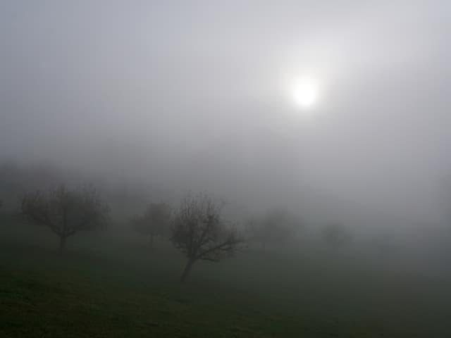 Nebel lässt Bäume und Wiesen verschwinden