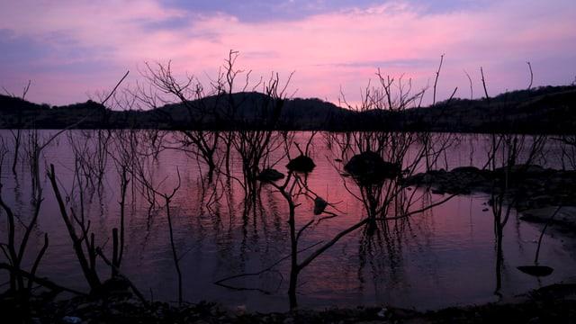 Blick auf ausgedörrte Bäume am venezolanischen Stausee El Guri. Es ist Abend und der Himmel im Süden Venezuelas leuchtet violett.