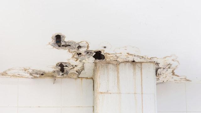 In einer Altbauwohnung hat es Löcher in der Decke und es bildet sich Schimmel.