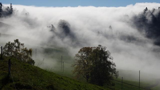 Oben knapp noch blauer Himmel, dann Nebelmeer, welches zum Fotografen den Hang hinunter fliesst. Vorne Bäume und Wiese.