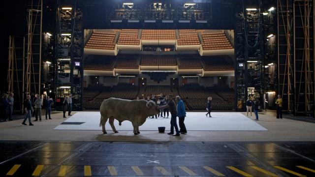 Stier auf der Bühne