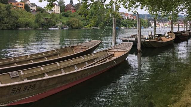 Weidlinge auf dem Schaffhauser Rhein
