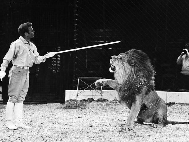 Dompteur mit Löwe.