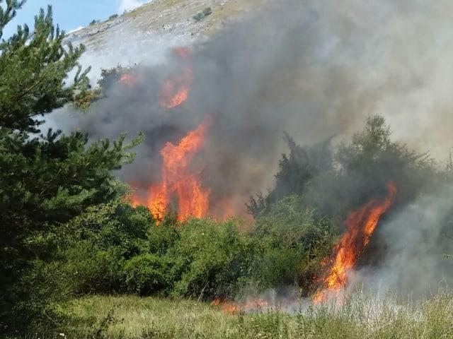 Feuer in Büschen