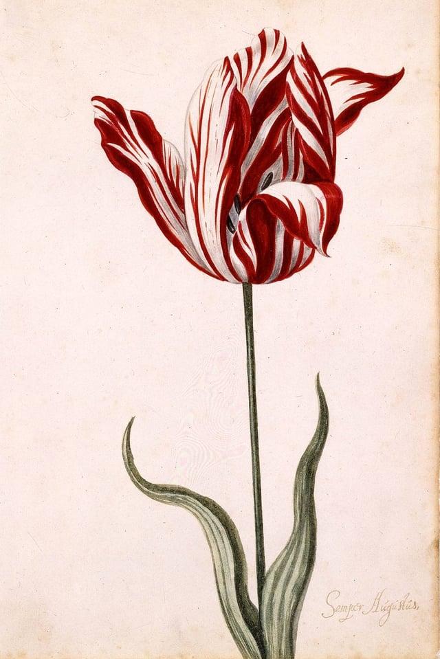 Ein Gemälde einer Tulpe auf neutralem Hintergrund