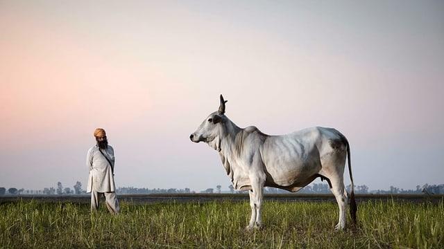 Indisch gekleideter Mann und Kuh