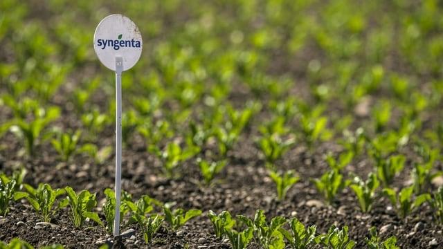 """Ein Acker mit jungen Pflanzen. Ein Schild mit der Aufschrift """"Syngenta"""" ist zu sehen."""