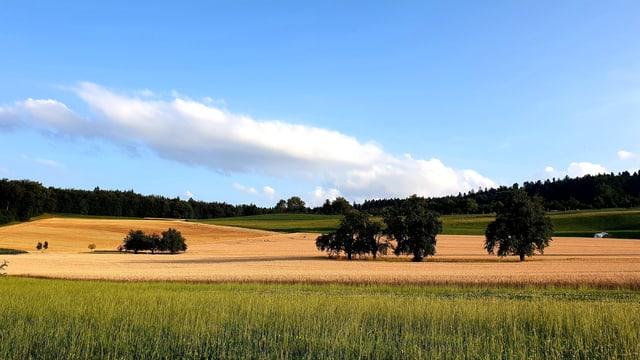 Sommerliche Felder bei Leutwil/AG