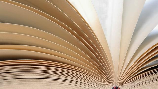 Die aktuellen Bücherlisten (PDF)
