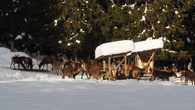 Wildtierfütterung im Winter