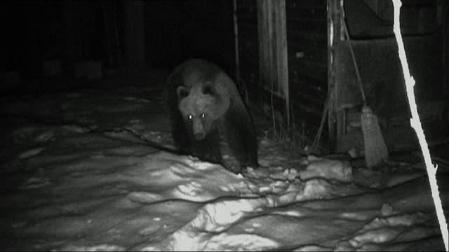 Video «Neue Bilder wilder Tiere: Die unglaubliche Nähe (1/3)» abspielen