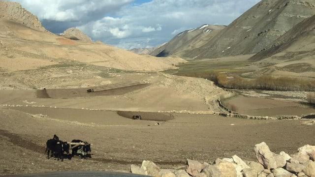 Zwei Ochsen beackern ein Feld in karger Landschaft.