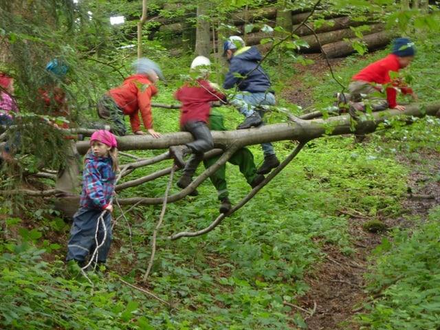 Wald Kinder Baum