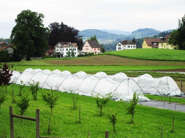 Sortengarten