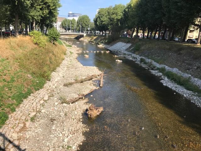 Flussufer der Wiese.
