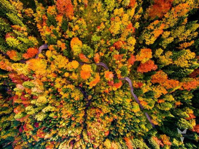 Ein Wald mit vielen Herbstfarben von oben von einer Drohne fotografiert.