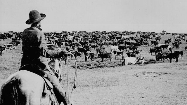 Ein Cowboy und seine Herde.