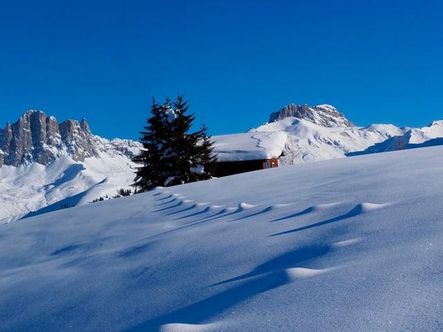 Eine dicke Schneedecke liegt auf dem Hang der Zaun ist nahezu bis obenhin eingeschneit. Dahinter Bäume und Berge, darüber der wolkenlose Himmel.