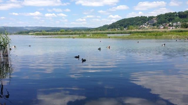 See mit Wasservögeln