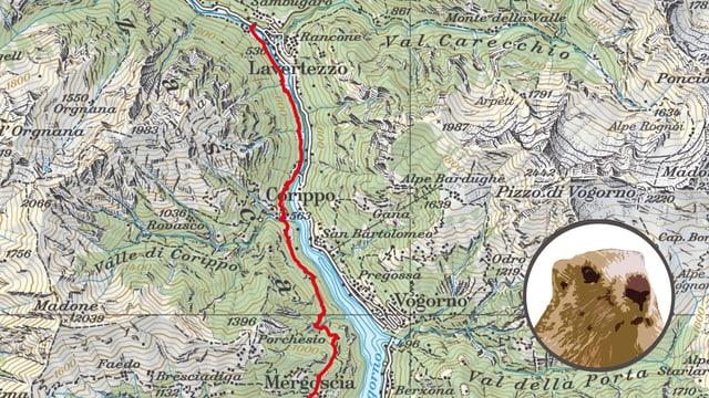 Karte mit Murmeli
